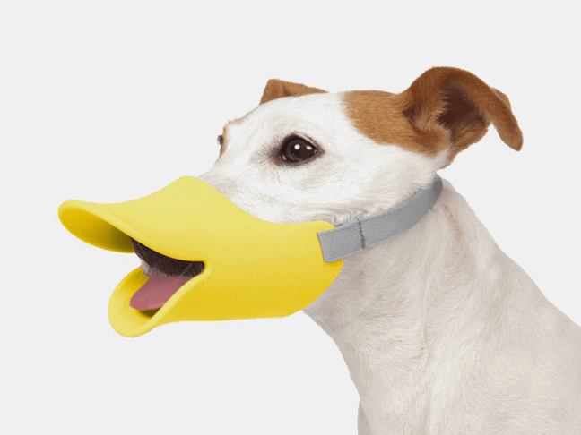 30 Fun, Easy 3D Printed Pet Toys & Accessories | All3DP