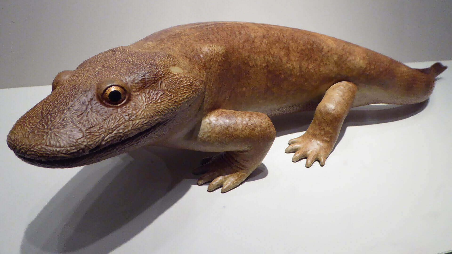 3D Scanning Reveals 350m Year Old Tetrapod Named Tiny   All3DP