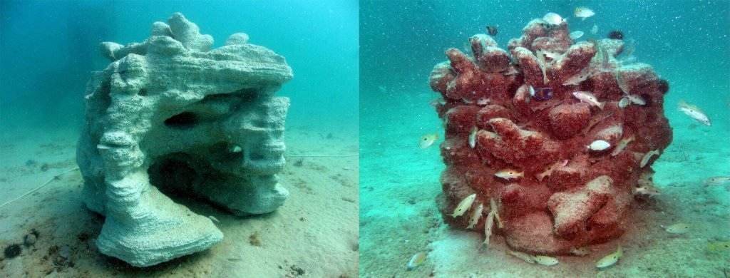 Scientists Print Artificial Coral to Rescue Great Barrier