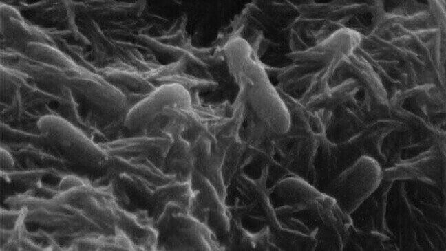 3D Printed Bacteria May Lead to Custom Graphene Materials | All3DP