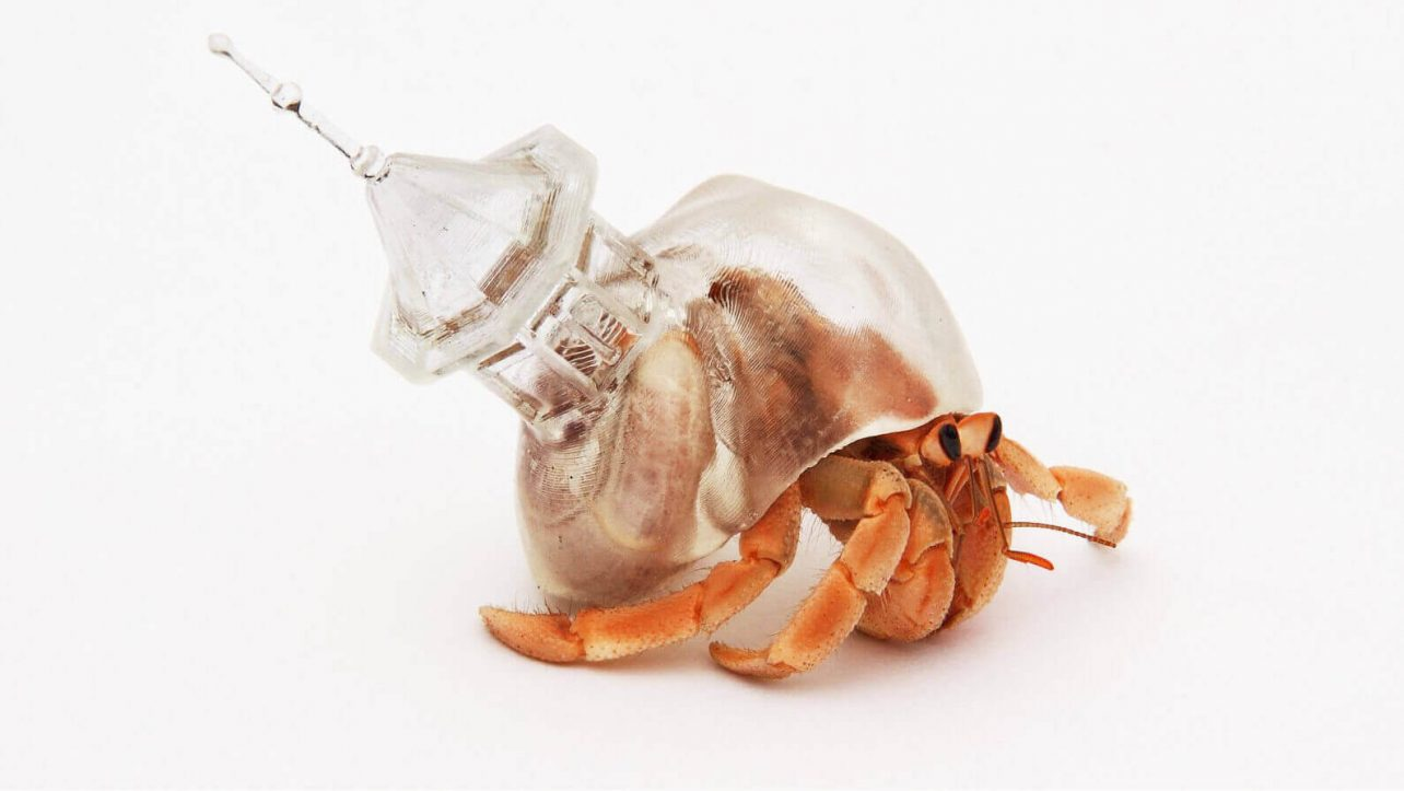 hermit crab lives in 3d printed shells made by artist all3dp