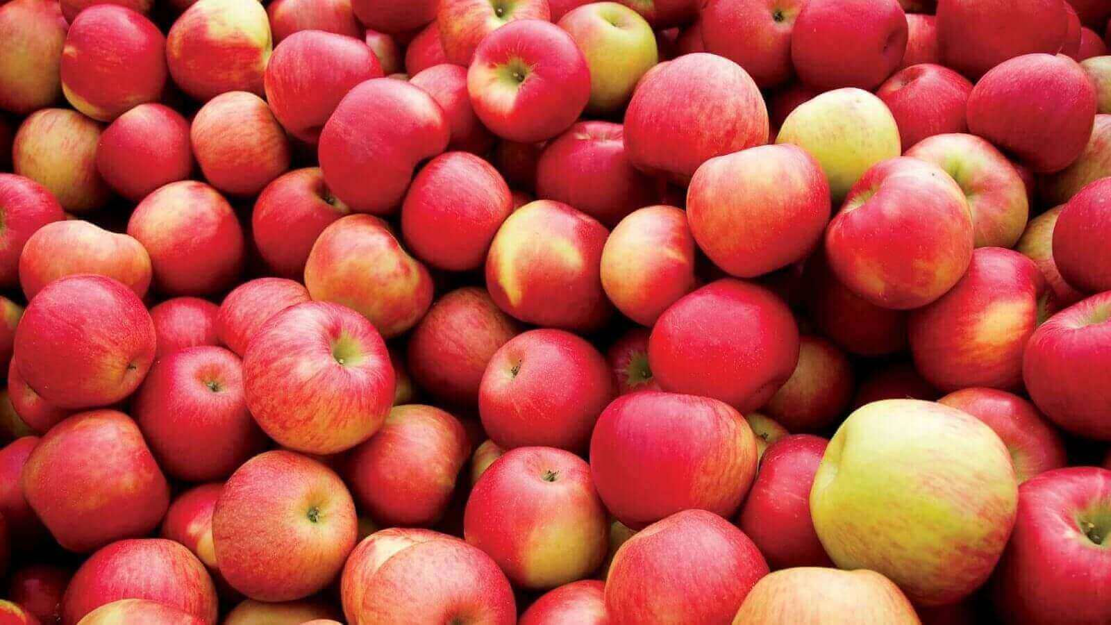 Biomaterial From Apple Waste Leads to Medical Breakthrough | All3DP