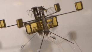Featured image of Insect-inspired Hybrid Drone Flies, Swims and Explodes Out of the Water