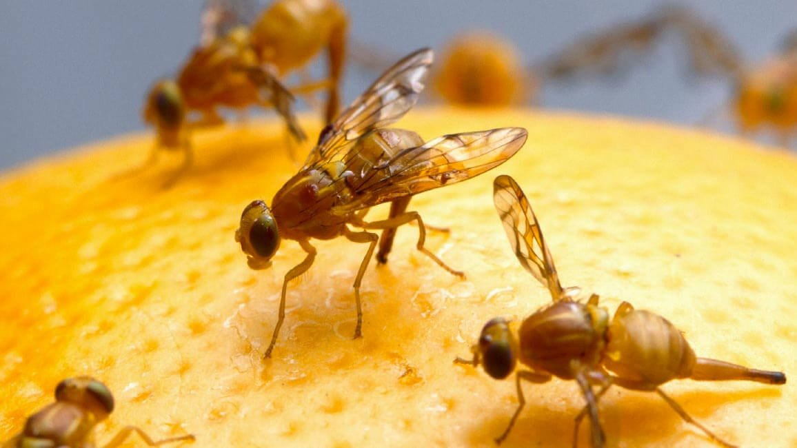 Researchers Invent 3D Printed Robot Lab to Study Fruit Flies | All3DP
