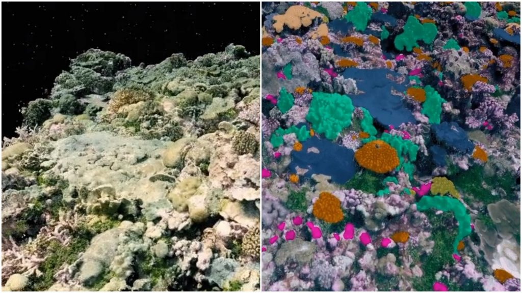 3D visualizations of the coral reefs