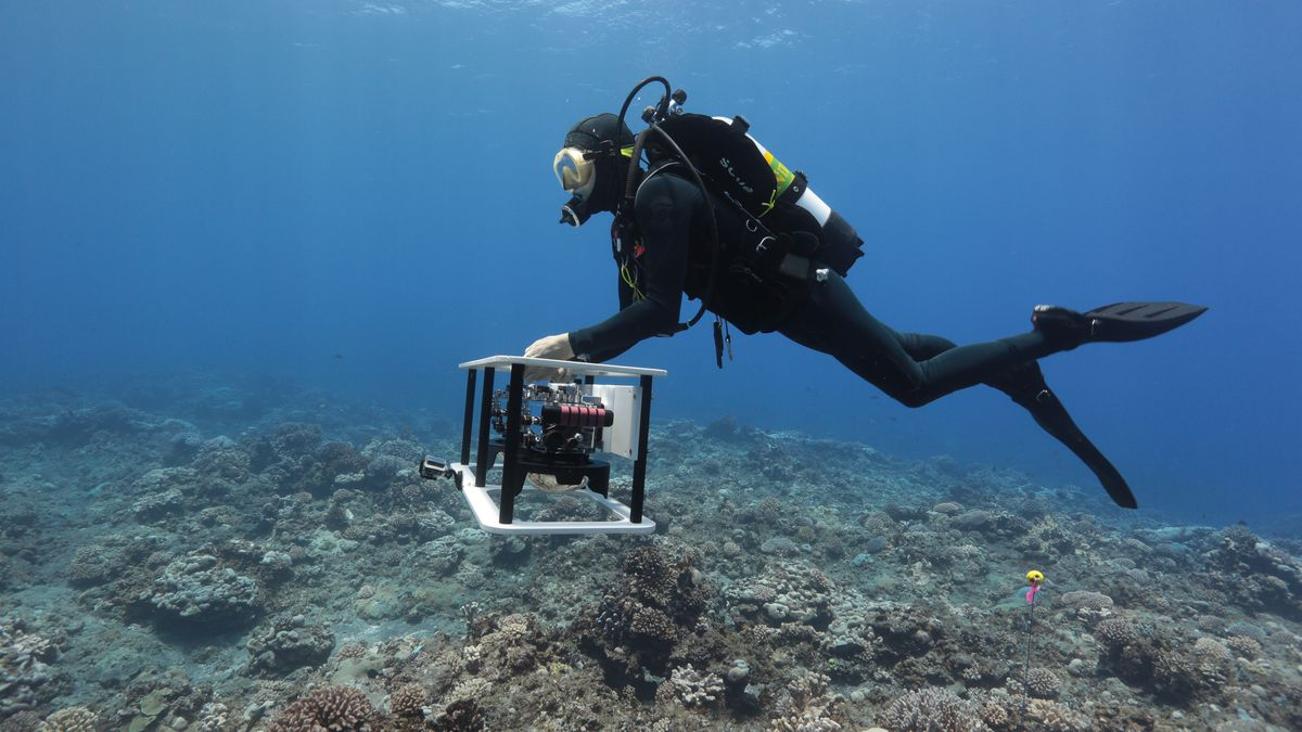 Protecting Coral Reefs through 3D Visualizations | All3DP