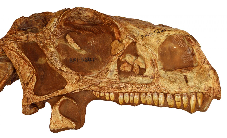 Researcher 3D Prints 200-Million-Year-Old Dinosaur Skull | All3DP