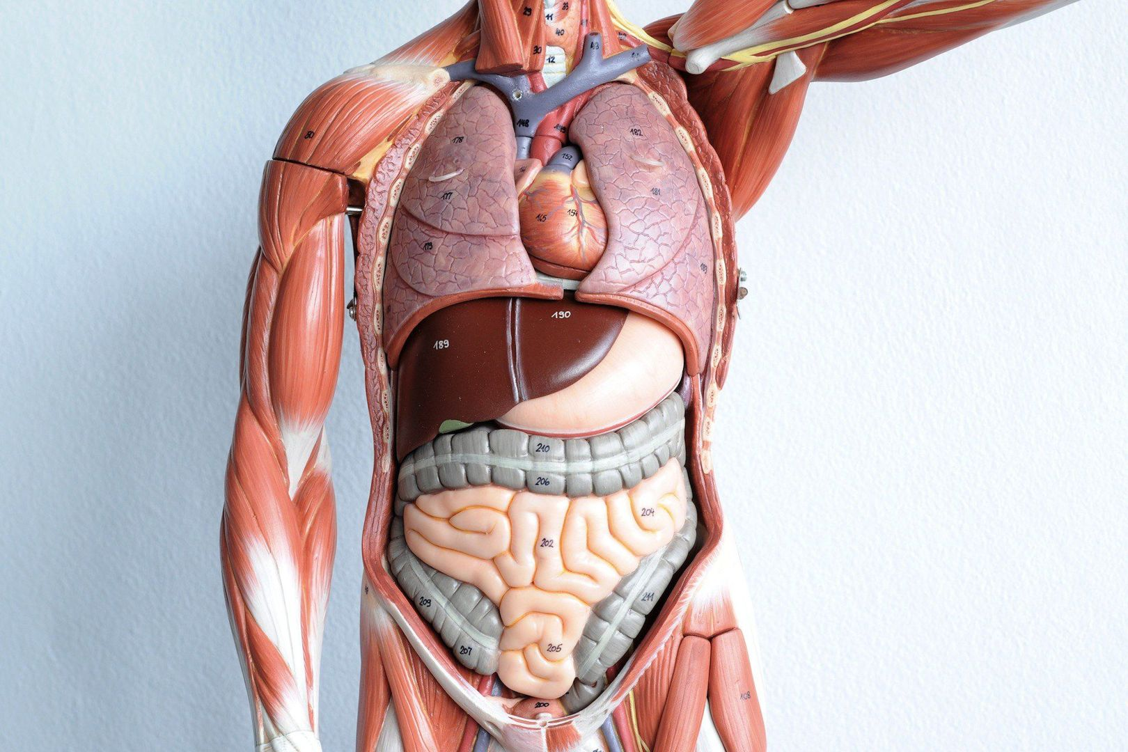 Materialise Receives Fda Clearance For 3d Printed Anatomical Models
