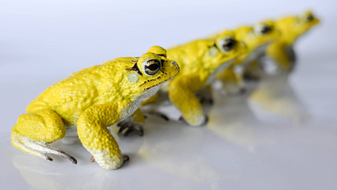 3D Printed RoboToads Help Explain Mating Habits | All3DP