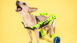 Featured image of Create Your Own Customizable Pet Wheelchair
