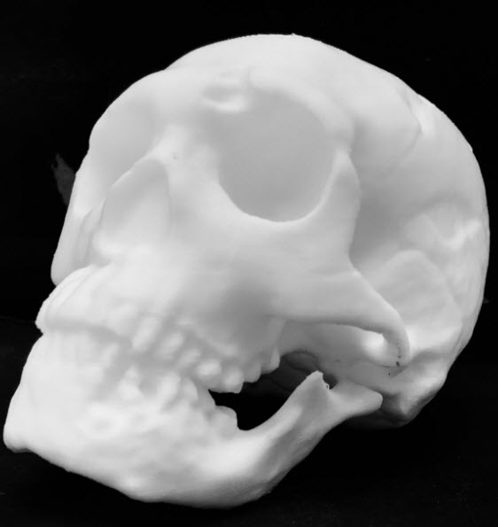3D Printed Skull – 10 Great Curated Models to 3D Print | All3DP