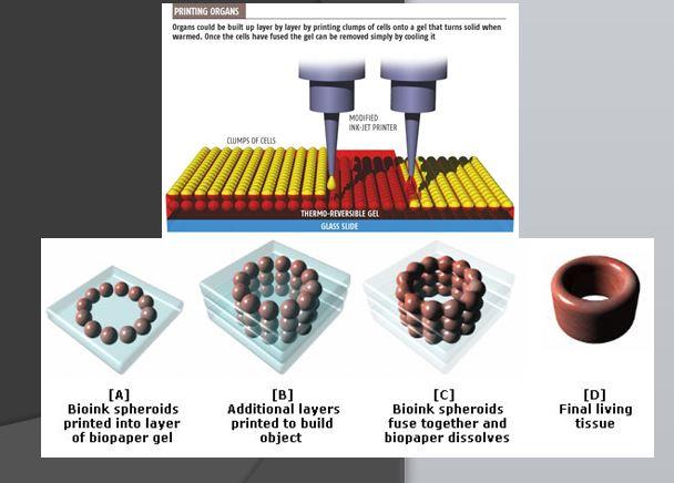 The 3D bioprinting process.