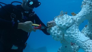 Featured image of 3D Printed Coral Reefs – 4 Most Promising Projects