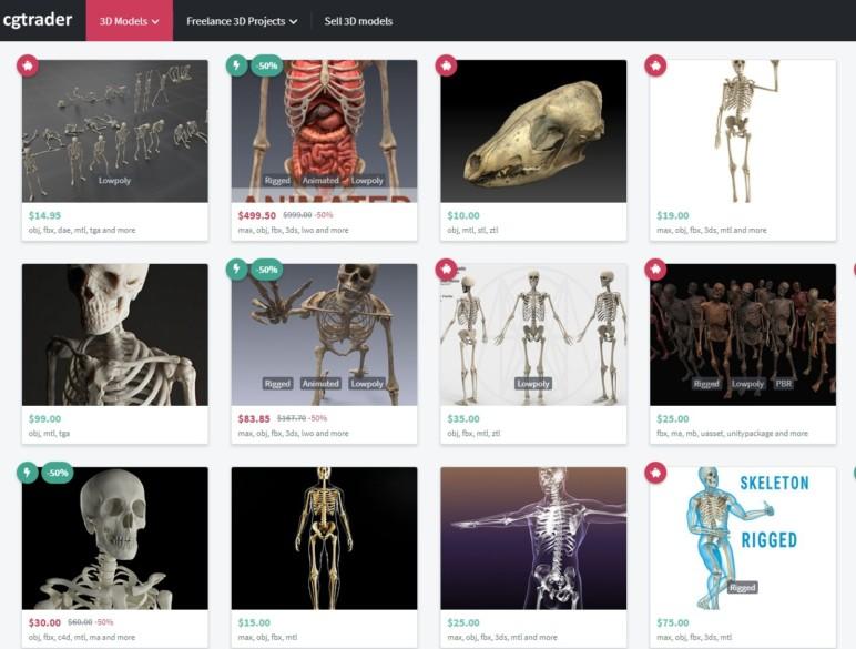 Skeleton 3D Model – 5 Best Sources for Skeletal Systems   All3DP