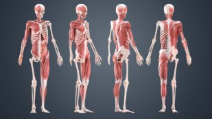 Featured image of Skeleton 3D Model – 5 Best Sources for Skeletal Systems
