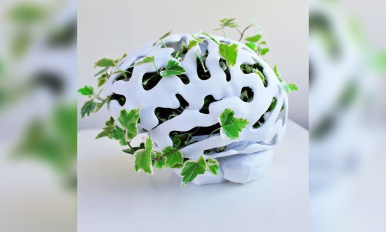 Imagen de Cosas para imprimir en 3D: modelos 3D y objetos 3D útiles: Macetero con forma de cerebro