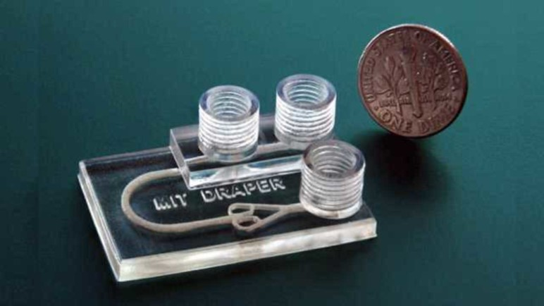 This 3D printed device simulates cancer treatments on biopsied tumor tissue.
